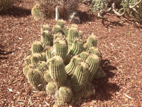 Some cacti near the Blue Lake, which reminded me of Marrakech