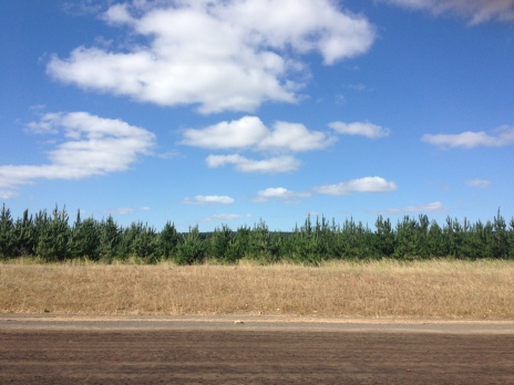 Lots of pine trees on the road, something you'll never see in Victoria